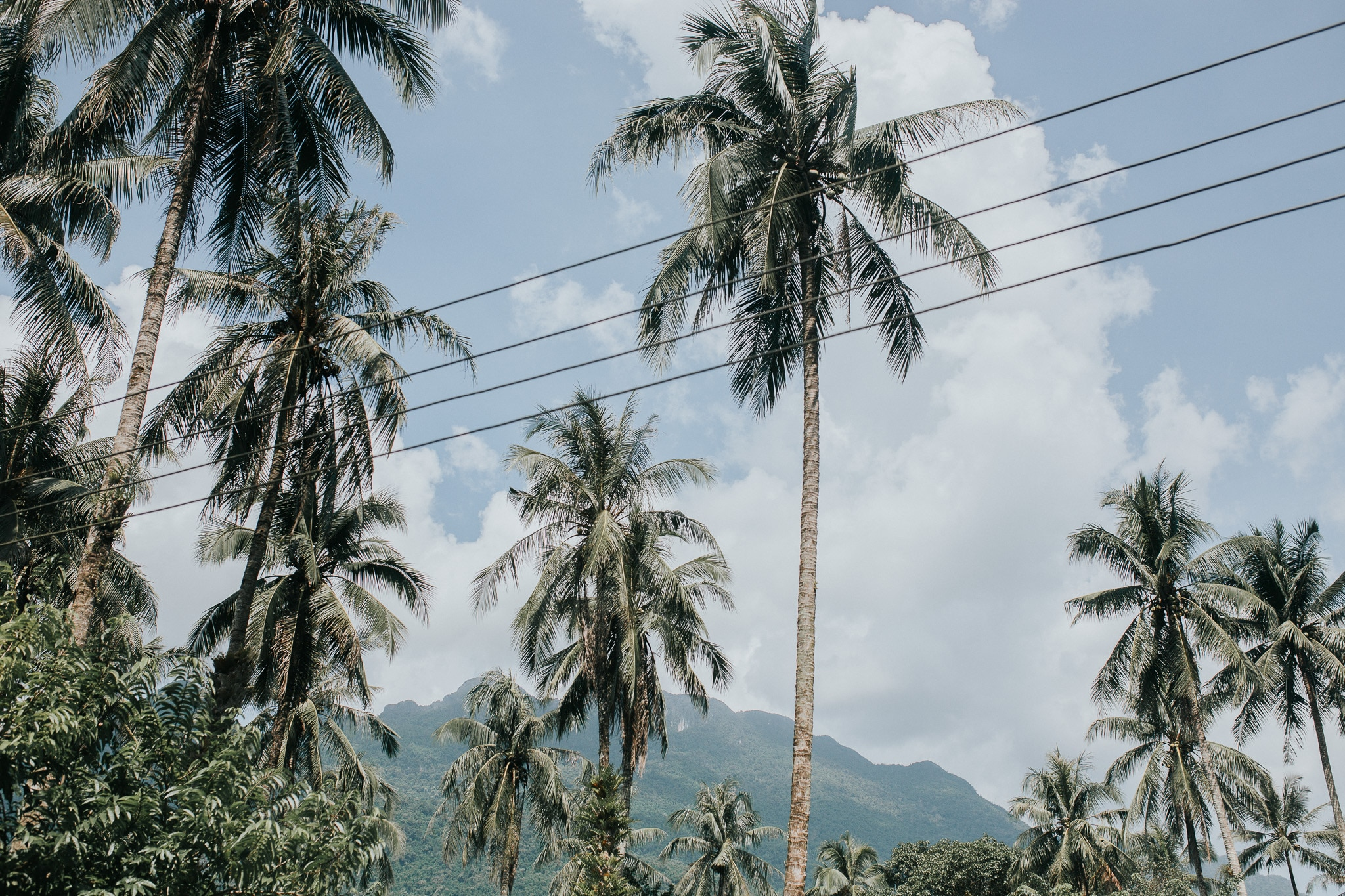 On week in Laos - Vang Vieng - Palm trees
