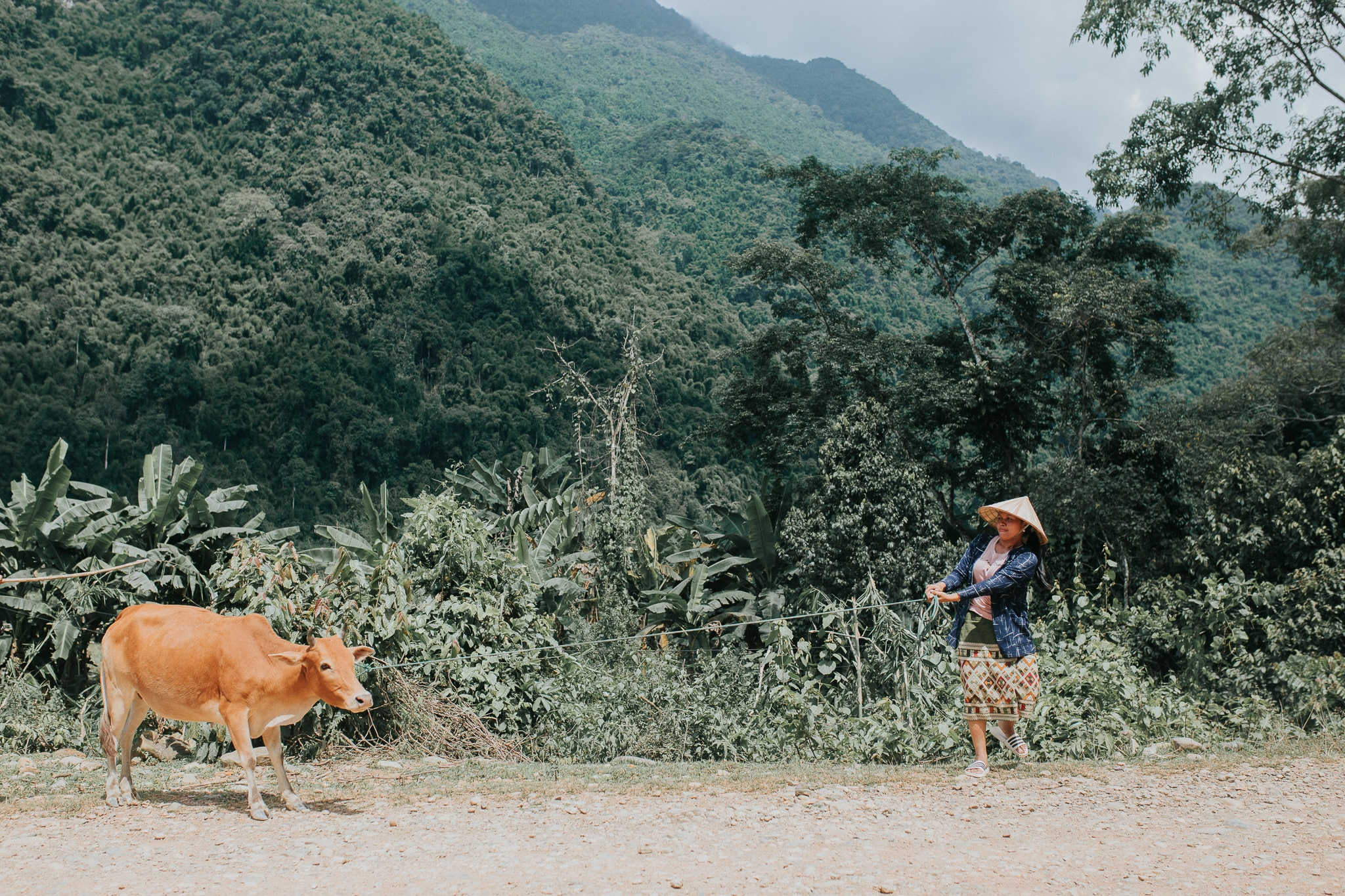 On week in Laos - Vang Vieng - Stubborn cow